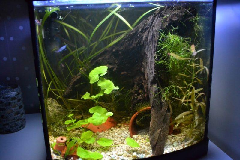 Mijn garnalen aquarium   LiefsCarolien nl